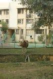 Kuh außerhalb des Gebäudes Lizenzfreie Stockfotografie