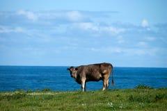 Kuh auf dem Horizont Lizenzfreies Stockbild