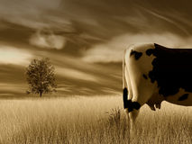 Kuh auf dem Landschaftgebiet Stockfotos