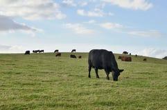 Kuh auf der Wiese stockfotos