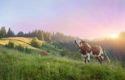 Kuh auf grüner Wiese Element der Auslegung Stockbild