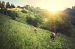 Kuh auf grüner Wiese Element der Auslegung Lizenzfreie Stockbilder