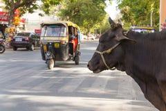 Kuh an der Seite der Straße in Indien Lizenzfreie Stockfotos