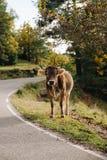 Kuh in der Waldlandschaft lizenzfreie stockfotos