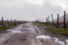 Kuh, die in den Vorbergen des Azuay-Berges weiden lässt Stockfoto
