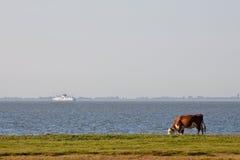 Kuh, die in einem Ackerland nahe Wasser weiden lässt Stockfotografie