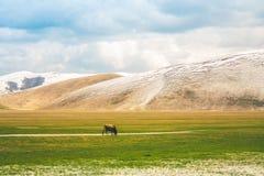 Kuh in einem Tal mit Bergen im Hintergrund Lizenzfreie Stockfotografie