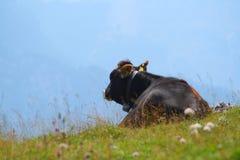 Kuh im Gras Stockfoto