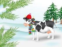 Kuh im Nadelholz des Winters Stockbilder