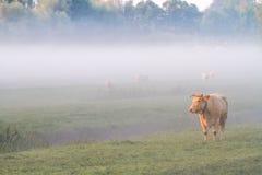 Kuh im Nebel Lizenzfreie Stockbilder