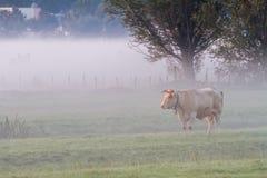 Kuh im Nebel Lizenzfreie Stockfotografie