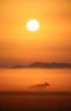Kuh im nebelhaften Sonnenaufgang Stockfoto