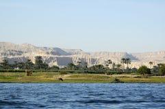 Kuh im Nil, Assuan Stockbilder