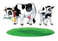 Kuh, kleine Kalbkuh und Graswiese Lizenzfreie Stockfotografie