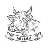 Kuh-Kopf Hand gezeichnete Skizze in einer grafischen Art Weinlesevektor-Stichillustration Lizenzfreie Stockfotos