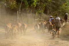 Kuh in LAK-Dorf in Dac Lak, Vietnam stockfoto