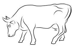 Kuh lokalisiert auf einem weißen Hintergrund Lizenzfreies Stockbild