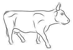 Kuh lokalisiert auf einem weißen Hintergrund Lizenzfreie Stockfotos