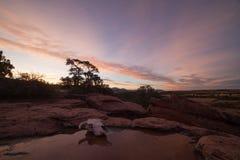 Kuh-Schädel in der Wüste Stockbilder