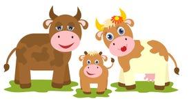 Kuh, Stier und kleines Kalb Stockfoto