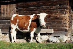 Kuh und Hütte Stockfotografie