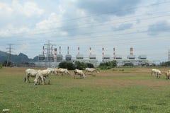 Kuh und Kraftwerk Stockbilder