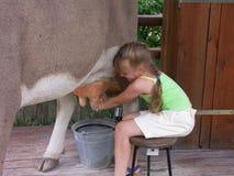 Kuh und Mädchen 02 Stockbild