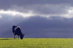 Kuh und stürmischer Himmel Stockfoto