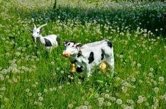 Kuh und Ziege Lizenzfreie Stockfotos