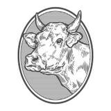 Kuhhauptporträt Hand gezeichnete Skizze in einer grafischen Art Weinlesevektorstich Lizenzfreie Stockbilder