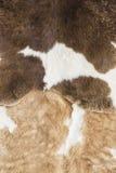 Kuhhaut Stockfoto