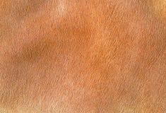 Kuhleder, die rotes Haar enthalten Stockfotos