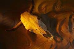 Kuhschädel im Wüstensand Stockfotografie