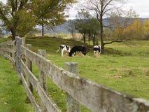 Kuhweide in Neu-England lizenzfreie stockfotos