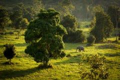 Kuiburi park narodowy Zdjęcia Royalty Free