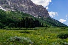 Kuifbutte de berglandschap en wildflowers van Colorado stock foto