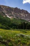 Kuifbutte de berglandschap en wildflowers van Colorado royalty-vrije stock afbeeldingen