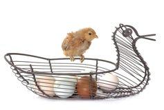 Kuiken en eieren royalty-vrije stock foto