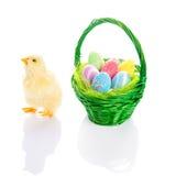 Kuiken en de mand van Pasen met eieren Stock Foto