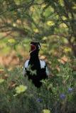 Kuiken in het nest in savanne stock foto