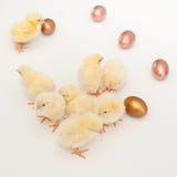 Kuikens & eieren Stock Foto's