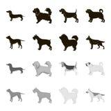 Kuilstier, Duitse herder, chow-chow, schnauzer Hondrassen geplaatst inzamelingspictogrammen in zwart, zwart-wit stijl vectorsymbo Royalty-vrije Stock Afbeelding