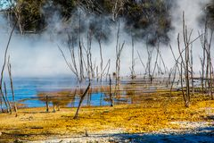 Kuirau Park, Rotorua. Geothermal activity showing sulphur and dead trees. Kuirau park is a few minutes walk from the centre f Rotorua royalty free stock photography