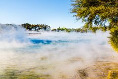 Kuirau Park, Rotorua. Geothermal activity showing sulphur and dead trees. Kuirau park is a few minutes walk from the centre f Rotorua stock images