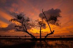 Kukud lagun i Thailand Arkivbilder