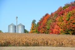 Kukurudz gospodarstwa rolne Fotografia Stock
