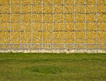Kukurudza, ściana, kolor żółty, naturalny, pamięć obraz stock
