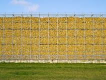 Kukurudza, ściana, kolor żółty, naturalny, pamięć fotografia royalty free