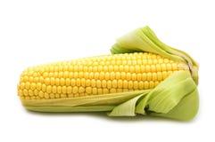 kukurudza świeża Obraz Royalty Free