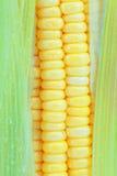 kukurudza świeża Obrazy Stock
